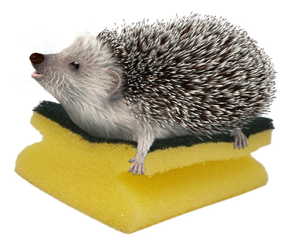 Spontex hedgehog on a Washups Sponge Scourer